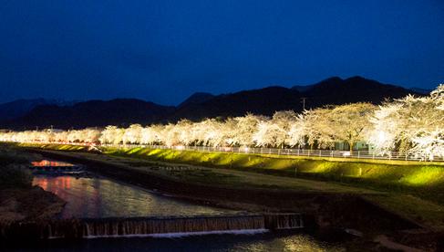 馬見ヶ崎(まみがさき)川沿いのさくらライン